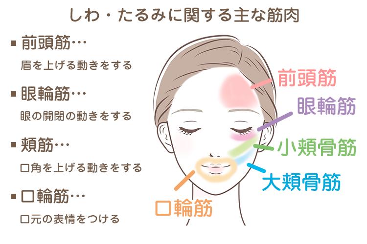 図:たるみやすい表情筋